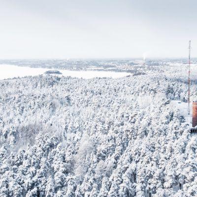 Talvinen näkymä Pyynikinharjulta