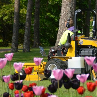 En ung man kör omkring på en gräsklippare i en park. I förgrunden syns färggranna tulpaner.