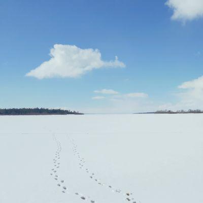 Askeleet lumella Perämeren jäällä
