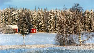 Punainen talo metsän laidalla talvisessa maisemassa.