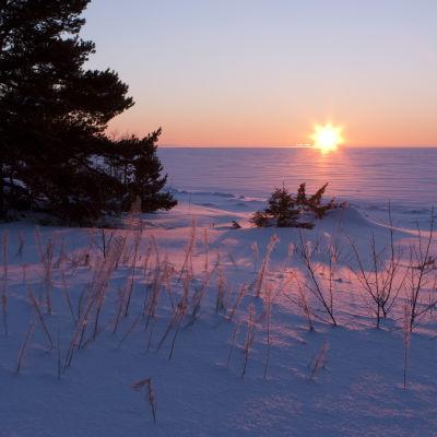 Solnedgång i skärgården på vintern.
