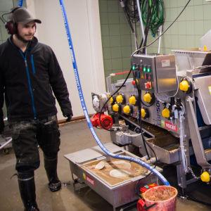 Äpplen pressas till must i en maskin.