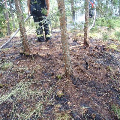 Terräng som är svart efter att ha brunnit. I bakgrunden syns en brandman.