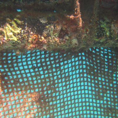 Nätet vid Dolphin Reef