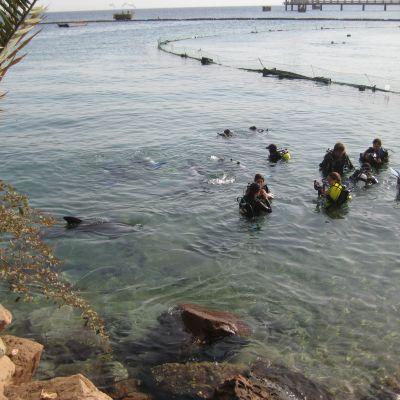 Delfiner vid Dolphin Reef
