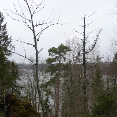 Vy mot Lojosjön från Liessaari.