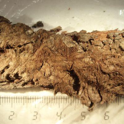 Naisen haudasta löytynyt karhuntaljan palanen.