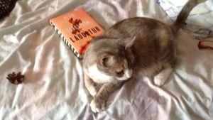 Katten, kotten och estetik