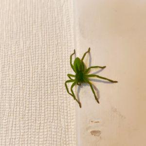 En grön spindel