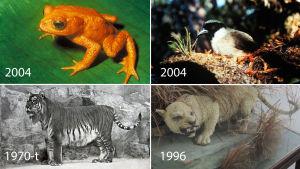 utdöda djur