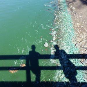 Skuggan av två personer på en brygga faller över en strand och vatten som är helt grönt av blågröna alger.