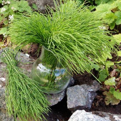 En vas med åkerfräken på en sten i en blomrabatt.