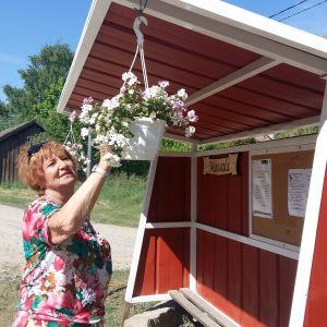 Cynthia Brunow vattnar blommor vid Mossalas nymålade busskur i rött, med en mås målad på sidan.