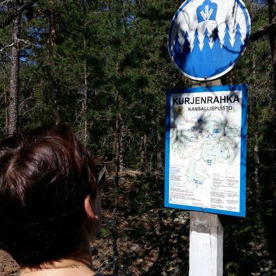 En dam tittar på en karta över vandringsleder i Kurjenrahka nationalpark.