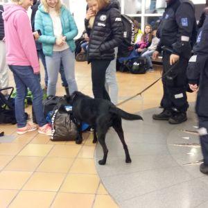 Narkotikahund går runt bland väskor och passagerare i Åbo hamnterminal.