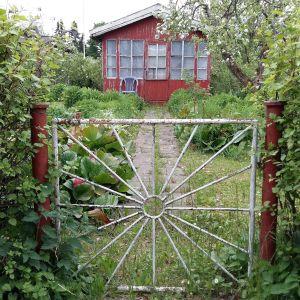 Kuppis koloniträdgård.