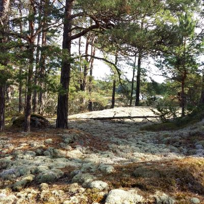 Fridfull dag i Åbolands skärgård.