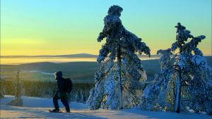 Mies kulkee talvisessa tunturimaisemassa