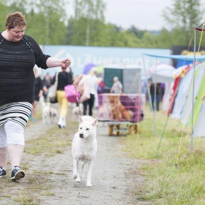 Kishu on Suomessa harvinainen japanilainen koirarotu.