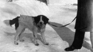 Torsten Korsström med hunden Jeppe i Nykarleby.