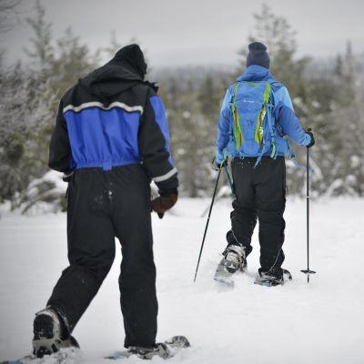Turister på tur i fjällen. De går med snöskor och har stavar i händerna. De har ryggarna vända mot kameran. Vädret är dimmigt.