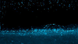 självlysande alger som ser ut som en stjärnhimmel
