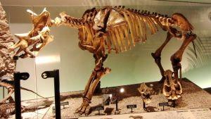 Fossil av utdött djur från eocen-eran.