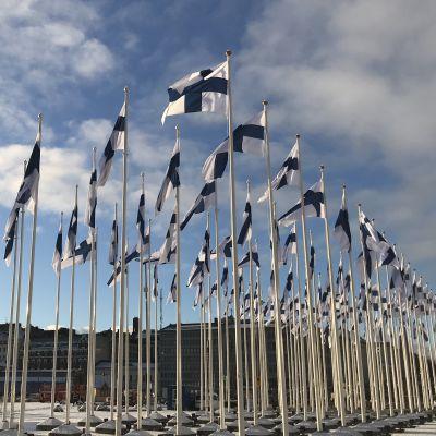Hundra finska flaggor vajar mot en blå himmel på Salutorget i Helsingfors.