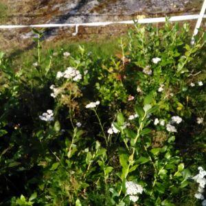 Varför finns det blåbär som växer vid buskar på gården? undrar Richard.