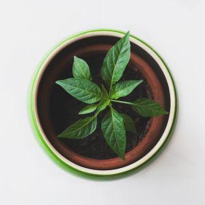 kasvi kasvaa purkissa