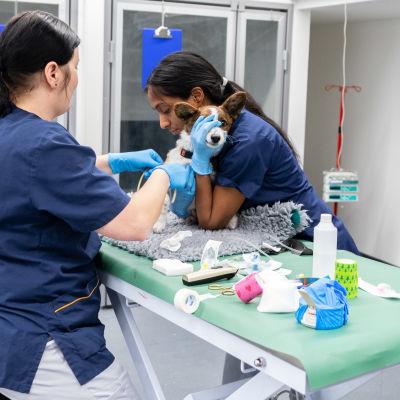 Koda 4kk hoidettavana eläinsairaala Veterissä
