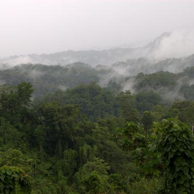 Papua Nya Guinea