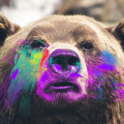 Artikkelikuva karhujuttuun, editoitu