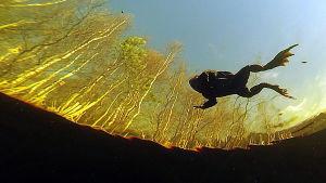 rupisammakko uimassa