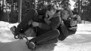 En ung Anders Wiklöf åker kälke tillsammans med sin bror Lasse och Janke Ahlman.