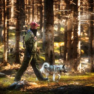 En man i gröna kläder och röd mössa och vapen på ryggen går raskt med sin hund (i koppel) i en solig granskog.