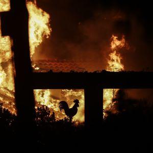 Skogsbränder i Mati öster om Aten.