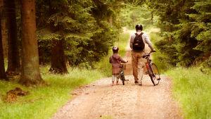 En vuxen och ett barn leder sina cyklar längs en väg i skogen.