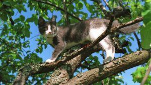 katt på gren