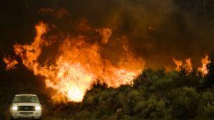 Skogsbränder rasar i USA