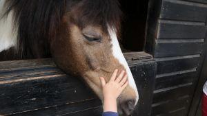 Lapsi silittää hevosen turpaa.