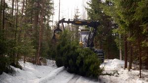 Moto kaataa puun.