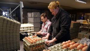 Pariskunta pakkaa kananmunia kennoihin.