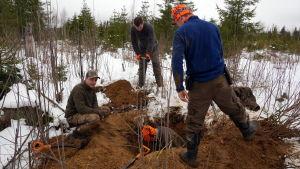 Metsästysporukka kaivaa kuoppia supikoirajahdissa.
