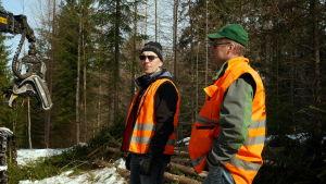 Kaksi miestä seuraa metsähakkuuta.