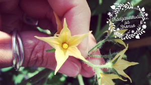 Bild på en blomma (trädgårskväll på strömsö)