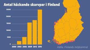Diagram över antal häckande skarvpar i Finland