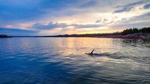 En simmare styr ut mot öppet hav.