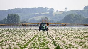 Maanviljelijä ruiskuttaa perunapeltoa.