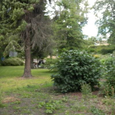 I Skolparken i Jakobstad samlas gäng för att dricka alkohol